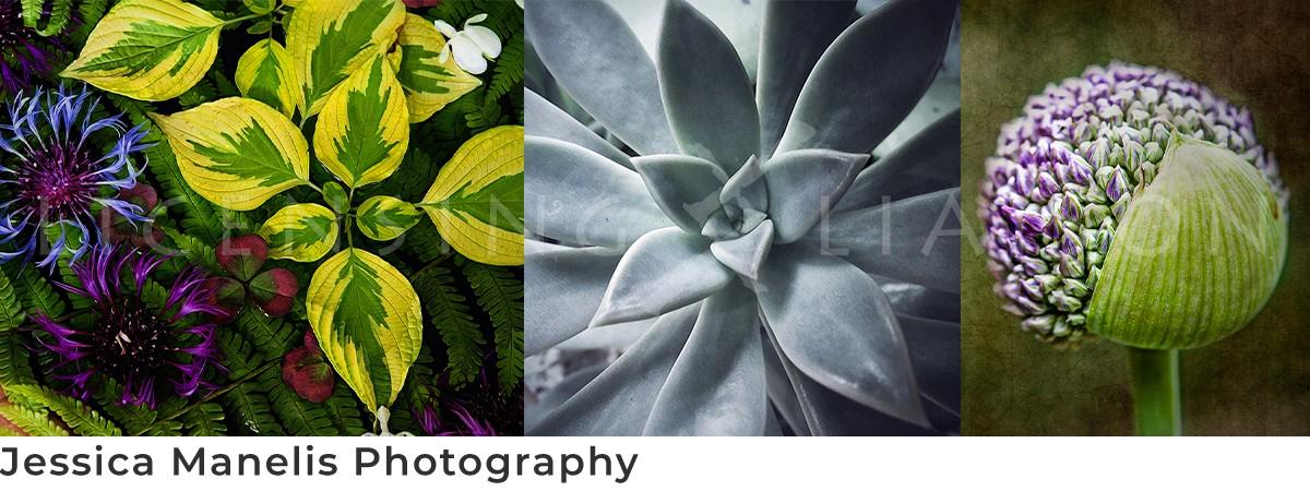 Jessica Manelis Photography